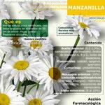 Infografía resumen de la Manzanilla