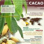 Cacao infografía