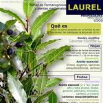 Propiedades y beneficios del Laurel
