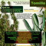 Tomillo propiedades infografía