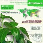 Albahaca Infografía
