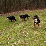 Bonnie, Keela und Bud