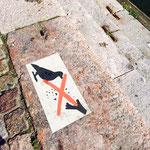 カモメ餌やり禁止