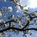 Die Seele baumeln lassen, den emsigen Bienen lauschen und den süßen Duft der Apfelblüten und des nahen Flieders genießen