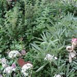 Ein Ausschnitt vom Kräutergarten