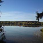 Seeholz am Tachinger See