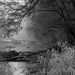 Altwasser mit Schilf und umgefallenen Bäumen