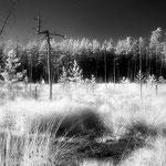 Moor im Mantler Wald