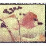 "Polaroid ""Imagetransfer"""