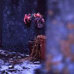 Blumenschmuck auf Friedhof