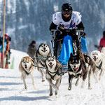 Course de traîneaux à chiens Gadmen