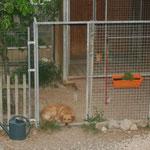 Gringo qui ne peut pas dormir la porte fermée