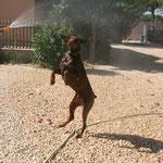 Ghost adore jouer avec le jet d'eau