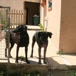 Zira et Pietra