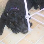 Inka se repose après le jeu