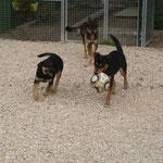 Fifi, Asy et Végas en plein match de foot