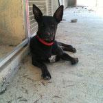 Tino et ses célèbres oreilles !!!!