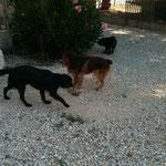 Télio et Bianca