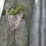 Natourzeiten - Herz in Baumrinde