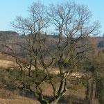 Natourzeiten -  Baum am Köpperkopf