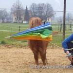 Angsttraining...Schirm kann man halten