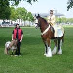 BEA Pferd 2011
