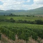ブルガリアワイン2