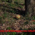 Spielen Wildschweine etwa Fußball