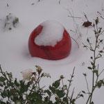 winterliches Rot im Schnee