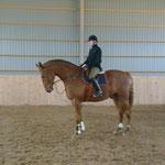 Sune är enda hästen som jag inte känner mej lång på