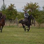 Western-& Freizeitpferde