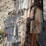 arbres pétrifiés Fitz Roy