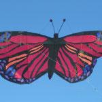 Schmetterling von Regina