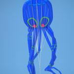Tintenfisch (Octopus)