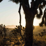 Joshua Tree NP, Kalifornien