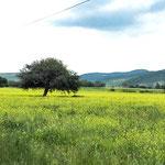 Campo de Flores, Gto