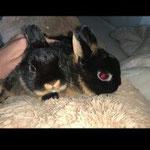 Das Hasenpaar Tommy und Annika hat sein Hoppelglück in Jettenbach gefunden.