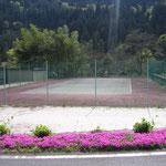 テニスコートと芝桜