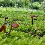 里山の森の足下には、苔や幼樹のスモールワールドが!