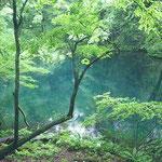 十二湖の青池 幻想的な佇まい