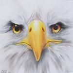 Im Angesicht des Adlers