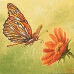 Schmetterling im Anflug