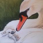 Schwanen-Mama mit Küken