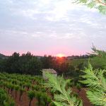 7h28, 25 mai 2015 ,levé de soleil sur les vignes