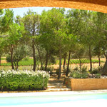 piscine/espace vert/vignes
