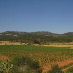vue sur le vignoble depuis la véranda