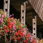 der Blumenbalkon