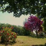 Chambre d'hôtes Le Pré Joli - Les couleurs du jardin