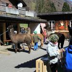 Kurs 110 Die Kinder führen die Lamas über den Hindernissparcours