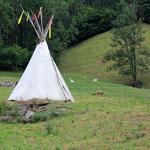 Die Lamas im Camp